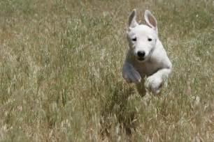 greyhoundog